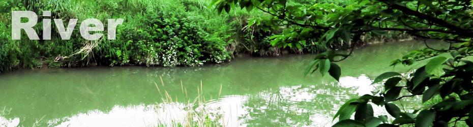 川や池などに出没する危険性のある生物の出没注意看板